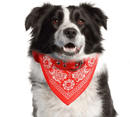 Cute Dog/Cat Collar with Paisley Bandana - Red - Large