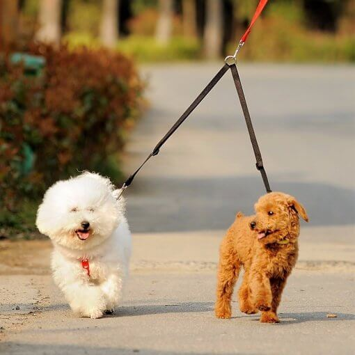 Dog Leash Coupler - Walk two dogs with a single leash